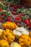 Πράσινα και άσπρα κολοκύνθη και viburnum λαχανικών Στοκ φωτογραφία με δικαίωμα ελεύθερης χρήσης
