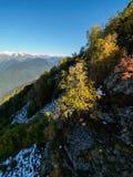 Πράσινα και κίτρινα δέντρα στην κλίση σκι υψηλών βουνών στοκ εικόνα
