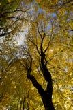 Πράσινα και κίτρινα φύλλα κορωνών των δέντρων φθινοπώρου στοκ εικόνες