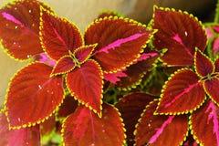 Πράσινα και κόκκινα φύλλα Στοκ εικόνες με δικαίωμα ελεύθερης χρήσης