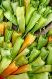 Πράσινα και πορτοκαλιά πιπέρια τσίλι στοκ εικόνες