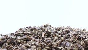 Πράσινα κινεζικά τσάγια απόθεμα βίντεο