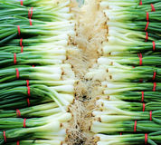 πράσινα κρεμμύδια Στοκ εικόνες με δικαίωμα ελεύθερης χρήσης