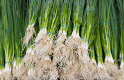 πράσινα κρεμμύδια s αγοράς &alp Στοκ φωτογραφία με δικαίωμα ελεύθερης χρήσης