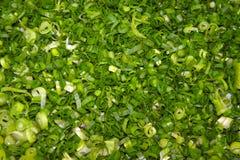 Πράσινα κρεμμύδια που κόβονται σε έναν τέμνοντα πίνακα Στοκ φωτογραφίες με δικαίωμα ελεύθερης χρήσης