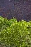 πράσινα κόκκινα δέντρα βράχων Στοκ Φωτογραφίες