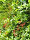 Πράσινα κόκκινα λουλούδια φύλλων Στοκ φωτογραφία με δικαίωμα ελεύθερης χρήσης