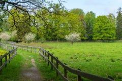 Πράσινα λιβάδια γουρνών μεταβάσεων με τον ξύλινο φράκτη στοκ φωτογραφία με δικαίωμα ελεύθερης χρήσης