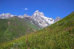 Πράσινα λιβάδια στα βουνά Τοποθετήστε Ushba, κύρια καυκάσια κορυφογραμμή στοκ εικόνες