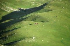 Πράσινα λιβάδια στο εθνικό πάρκο Durmitor, Μαυροβούνιο στοκ εικόνες