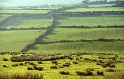 πράσινα λιβάδια στοκ εικόνες με δικαίωμα ελεύθερης χρήσης
