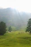πράσινα λιβάδια στοκ φωτογραφίες με δικαίωμα ελεύθερης χρήσης