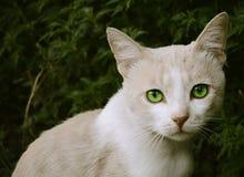 Πράσινα μάτια στοκ εικόνες