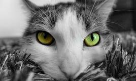 Πράσινα μάτια Στοκ Εικόνα