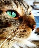 Πράσινα μάτια Στοκ φωτογραφία με δικαίωμα ελεύθερης χρήσης