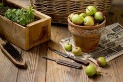 Πράσινα μήλα σε ένα δοχείο αργίλου σε ένα ξύλινο υπόβαθρο στοκ φωτογραφία με δικαίωμα ελεύθερης χρήσης