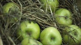 Πράσινα μήλα στο σανό Καλάθι με τα μήλα που βρίσκονται στο σανό Τα Juicy ώριμα μήλα και τα αχλάδια βάζουν τη θωρακική συγκομιδή τ Στοκ φωτογραφία με δικαίωμα ελεύθερης χρήσης