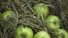 Πράσινα μήλα στο σανό Καλάθι με τα μήλα που βρίσκονται στο σανό Τα Juicy ώριμα μήλα και τα αχλάδια βάζουν τη θωρακική συγκομιδή τ Στοκ φωτογραφίες με δικαίωμα ελεύθερης χρήσης