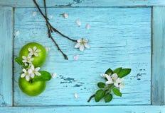 Πράσινα μήλα και λουλούδια μήλων Στοκ εικόνες με δικαίωμα ελεύθερης χρήσης