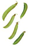 πράσινα μπιζέλια στοκ φωτογραφία