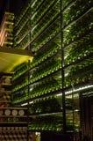 Πράσινα μπουκάλια Στοκ Εικόνα
