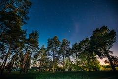 Πράσινα ξύλα δέντρων στο πάρκο κάτω από τον έναστρο ουρανό νύχτας επιτραπέζια χρήση φωτογραφιών νύχτας τοπίων εγκαταστάσεων εικόν Στοκ Εικόνα