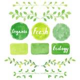 Πράσινα λογότυπα Watercolor και φύλλα δαφνών καθορισμένα Στοκ Εικόνα