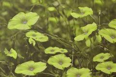 Πράσινα λουλούδια στο μουτζουρωμένο υπόβαθρο λεπτομερές ανασκόπηση floral διάνυσμα σχεδίων Πράσινα wildflowers στη χλόη Στοκ Εικόνες