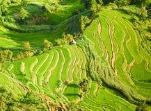 Πράσινα πεζούλια ρυζιού άνωθεν Στοκ φωτογραφία με δικαίωμα ελεύθερης χρήσης
