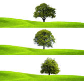 Πράσινα περιβάλλον και δέντρο Στοκ Εικόνες