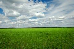 Πράσινα πεδίο και σύννεφα Στοκ Εικόνες