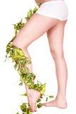 πράσινα πόδια δύο φύλλων Στοκ Εικόνες