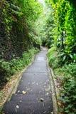 Πράσινα σκοτεινά τροπικά διάβαση & x28 ζουγκλών Μπαλί, Indonesia& x29  Στοκ εικόνες με δικαίωμα ελεύθερης χρήσης