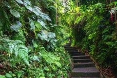 Πράσινα σκοτεινά τροπικά διάβαση & x28 ζουγκλών Bali& x29  Στοκ Φωτογραφίες