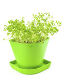 Πράσινα σπορόφυτα σε ένα δοχείο λουλουδιών Στοκ εικόνα με δικαίωμα ελεύθερης χρήσης