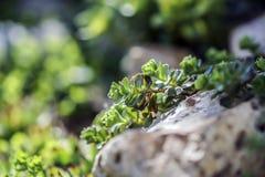 Πράσινα στους ηλιόλουστους βράχους στοκ φωτογραφία με δικαίωμα ελεύθερης χρήσης