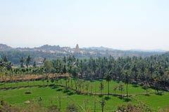 Πράσινα τομείς ή πεζούλια ρυζιού στο χωριό Hampi και το ναό Virupaksha Φοίνικες, ήλιος, τομείς ρυζιού, μεγάλες πέτρες στοκ φωτογραφία με δικαίωμα ελεύθερης χρήσης