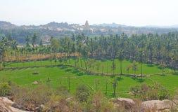 Πράσινα τομείς ή πεζούλια ρυζιού στο χωριό Hampi και το ναό Virupaksha Φοίνικες, ήλιος, τομείς ρυζιού, μεγάλες πέτρες στοκ εικόνα με δικαίωμα ελεύθερης χρήσης
