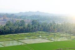 Πράσινα τομείς ή πεζούλια ρυζιού στο χωριό Hampi Φοίνικες, ήλιος, τομείς ρυζιού, μεγάλες πέτρες σε Hampi Τροπικός εξωτικός στοκ εικόνα