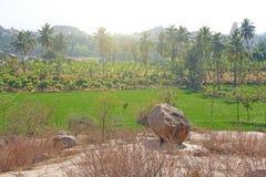 Πράσινα τομείς ή πεζούλια ρυζιού στο χωριό Hampi Φοίνικες, ήλιος, τομείς ρυζιού, μεγάλες πέτρες σε Hampi Τροπικός εξωτικός στοκ φωτογραφίες