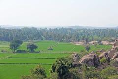 Πράσινα τομείς ή πεζούλια ρυζιού στο χωριό Hampi Φοίνικες, ήλιος, τομείς ρυζιού, μεγάλες πέτρες σε Hampi Τροπικός εξωτικός στοκ φωτογραφία
