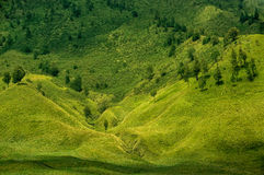 Πράσινα τοπίο λιβαδιών και ζεύγος των δέντρων Στοκ Εικόνα
