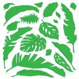 Πράσινα τροπικά φύλλα βοτανικής Στοκ Φωτογραφίες