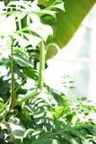 Πράσινα τροπικά φύλλα με το έντονο φως ήλιων Υπόβαθρο φύσης στοκ φωτογραφίες