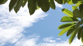 Πράσινα τροπικά φύλλα σε ένα υπόβαθρο μπλε ουρανού Ηλιόλουστη ημέρα στο τροπικό νησί του Μπαλί, Ινδονησία απόθεμα βίντεο