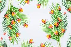 Πράσινα τροπικά φύλλα φοινικών και εξωτικά λουλούδια στο άσπρο υπόβαθρο, τοπ άποψη Πλαίσιο r Διάστημα αντιγράφων για το σχέδιό σα στοκ φωτογραφία με δικαίωμα ελεύθερης χρήσης