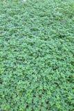Πράσινα υπόβαθρα φύσης φύλλων, μικρός κύκλος φύλλων φύσης πράσινος Στοκ Φωτογραφίες