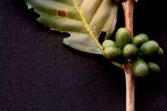 Πράσινα φασόλια καφέ στοκ εικόνα
