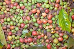 Πράσινα φασόλια καφέ Στοκ φωτογραφίες με δικαίωμα ελεύθερης χρήσης