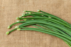 Πράσινα φρέσκα κρεμμύδια σκόρδου στοκ φωτογραφίες
